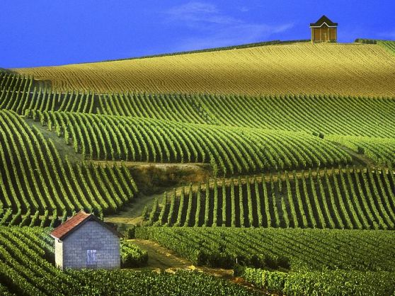 Panoramic View of Vineyards Champagne France